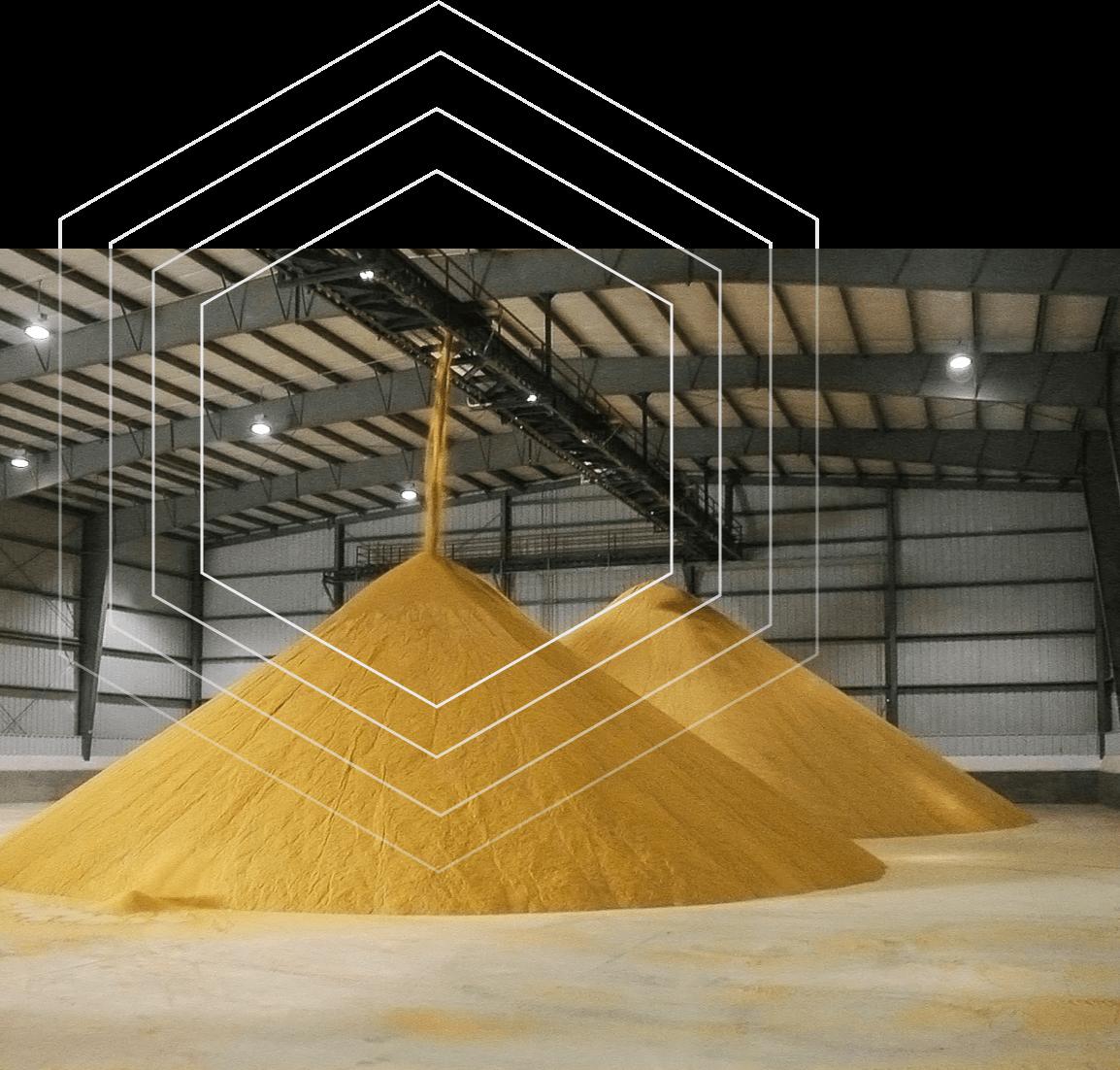 Varieties of distillers grains