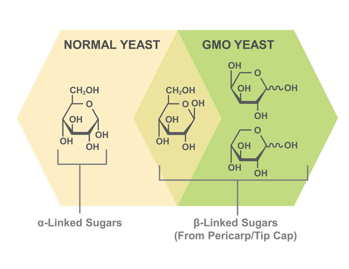 ICM Uses a Special GMO Yeast that can Ferment all the Sugars